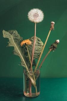 Mniszek lekarski w różnym stopniu dojrzałości od pąka do kwiatostanu z nasionami. etapy przemiany mniszka lekarskiego. obserwacja przyrody