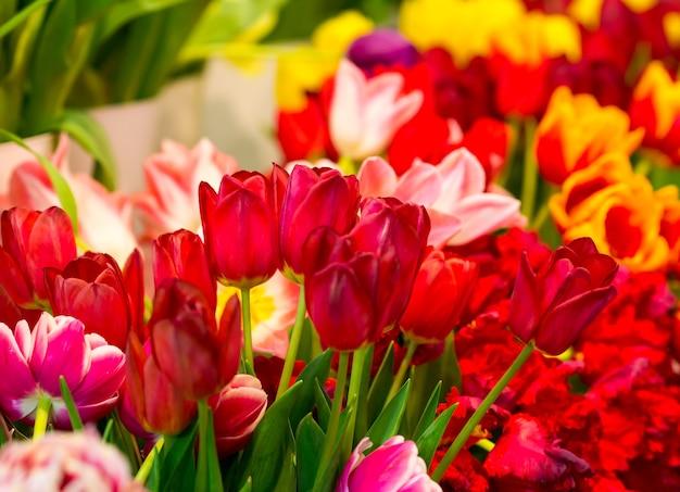 Mnóstwo świeżych tulipanów na polu z bliska
