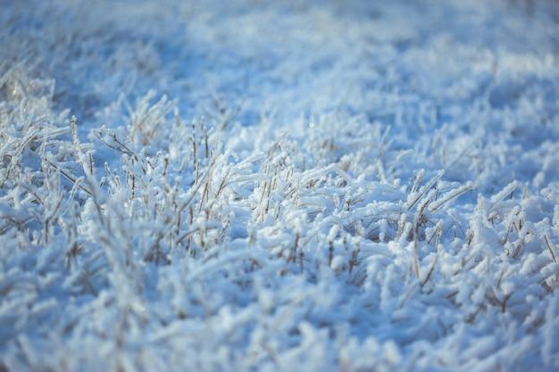 Mocna lodowata trawa z kryształkami lodu