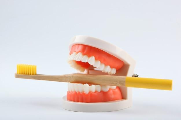 Model Dentystyczny Zębów I Produktów Do Pielęgnacji Zębów Na Kolorowym Tle Premium Zdjęcia