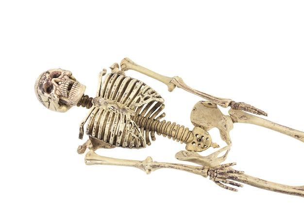Model ludzkiego szkieletu na białym tle.