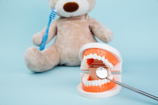 Model szczęki i wypchanego niedźwiedzia zwierzęcia z szczoteczką do zębów na białym tle na niebieskiej powierzchni. motyw dentysty dla dzieci