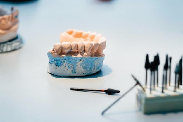 Model zębów wykonany z gipsu dla techników dentystycznych.