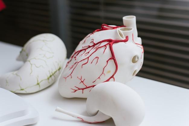 Modele 3d narządów. wydrukowano na sercu drukarki 3d.