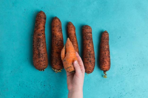 Modna brzydka marchewka ekologiczna w porównaniu z marnowaniem żywności małej dziewczynki.