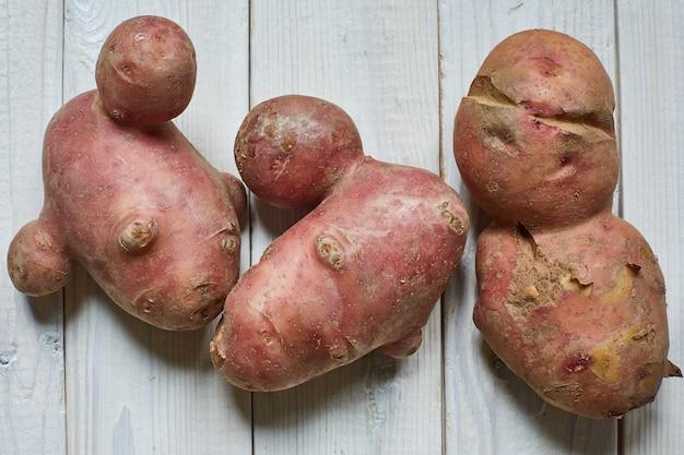 Modne, brzydkie organiczne syjamskie ziemniaki z domowym ogrodem. brzydka koncepcja marnowania warzyw lub żywności.