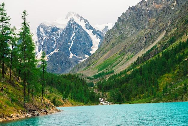 Modrzewie na brzegu turkusowego górskiego jeziora na tle gigantycznych zaśnieżonych gór