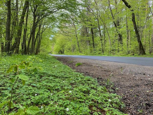 Mokra asfaltowa droga w lesie liściastym