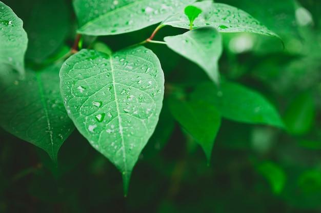 Mokra roślina pozostawia po deszczu