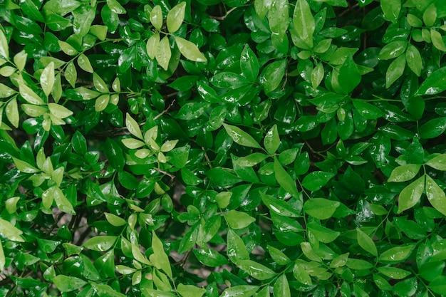 Mokra zieleń opuszcza natury tło.
