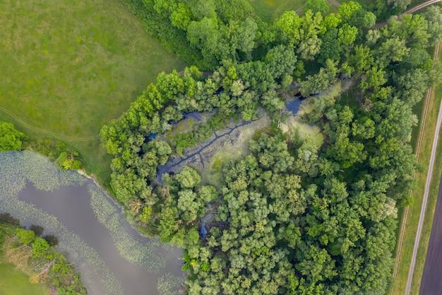 Mokradła rzeki morawy z widoku z góry na dół.