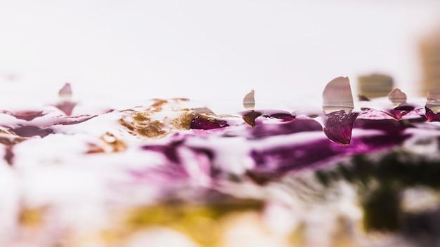 Mokre kolorowe stokrotki na białym tle