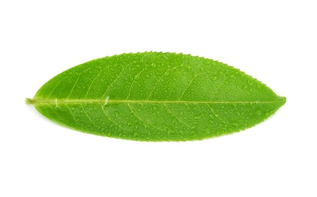 Mokre liście herbaty na białym tle