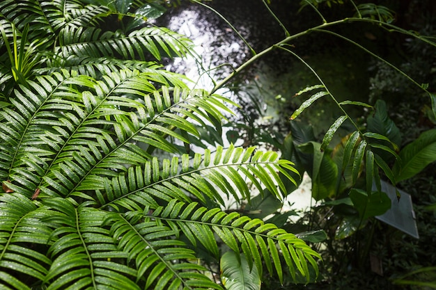 Mokre zielone rośliny w lesie