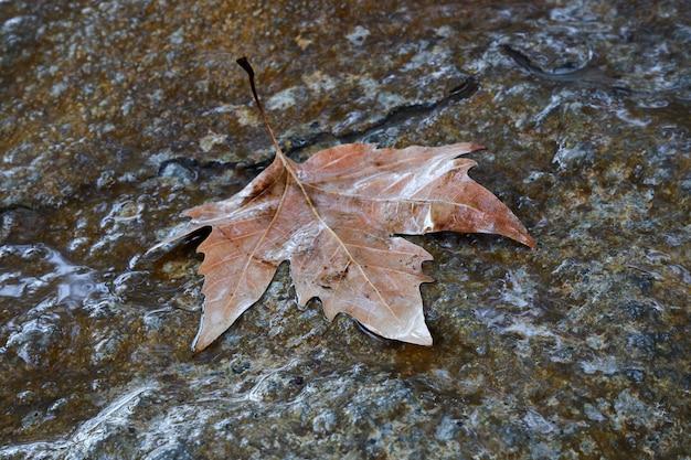 Mokry liść, który spadł z drzewa, leży na kamieniu w jesienny deszczowy dzień