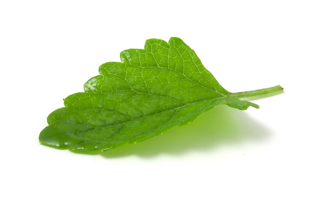 Mokry liść mięty na białym tle. roślina dodawana do świeżych napojów bezalkoholowych i alkoholowych.
