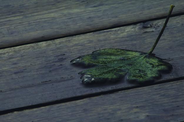 Mokry liść na drewnianym stopniu po deszczu. wyraźnie widoczna jest struktura drewna i wilgoć.