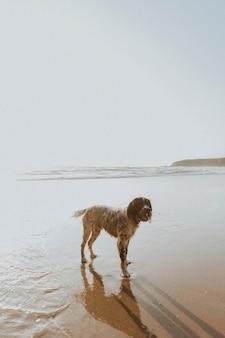 Mokry pies cieszący się plażą?