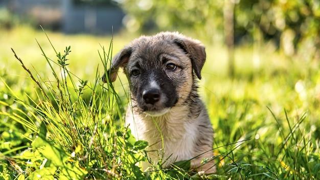 Mokry szczeniak na trawie w wiosce