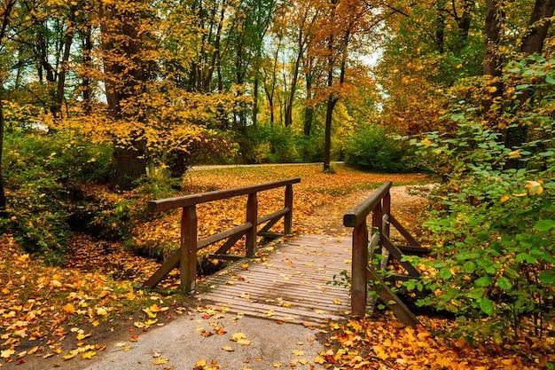 Monachium ogród angielski englischer park ogrodowy jesienią monachium bawaria niemcy