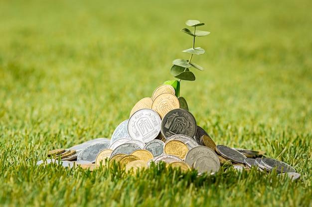 Monety na trawie