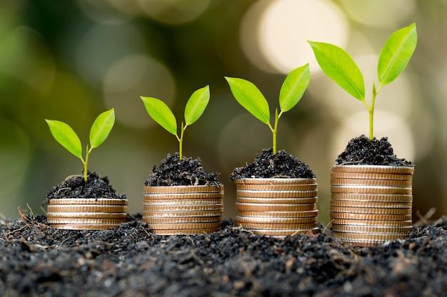 Monety są ułożone na ziemi, a sadzonki rosną na wierzchu