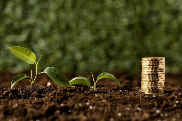 Monety ułożone na ziemi z roślinami