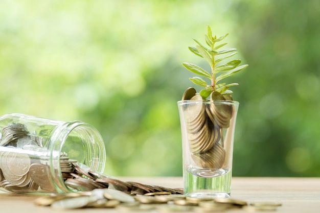 Monety w szklance z małym drzewem