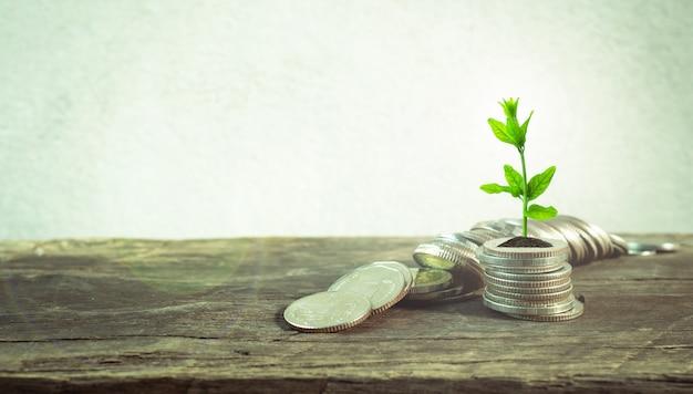 Monety z młodej rośliny na stole z tło cementu ścianą.
