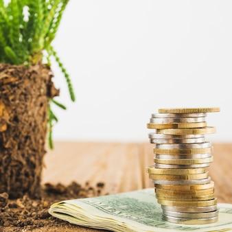 Monety z rośliną na stole