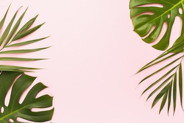 Monstera i liść palmowy na różowym tle z miejscem na kopię pośrodku