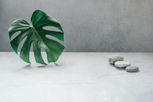Monstera liść i kamyk na szarym tle betonu z miejsca na kopię. koncepcja moda lato natura spa.
