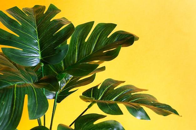 Monstera liść zbliżenie na żółtym tle. sztuczna roślina doniczkowa