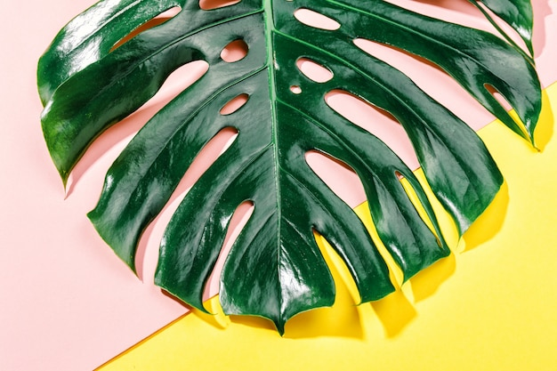 Monstera zielony liść na żółtym tle