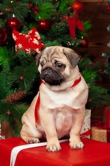 Mops z prezentami świątecznymi