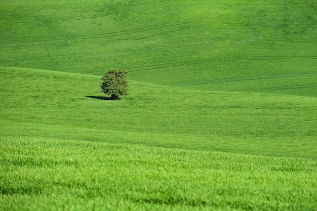Morawska toskania - piękny wiosenny krajobraz na południu moraw w pobliżu miasta kyjov. czechy - e