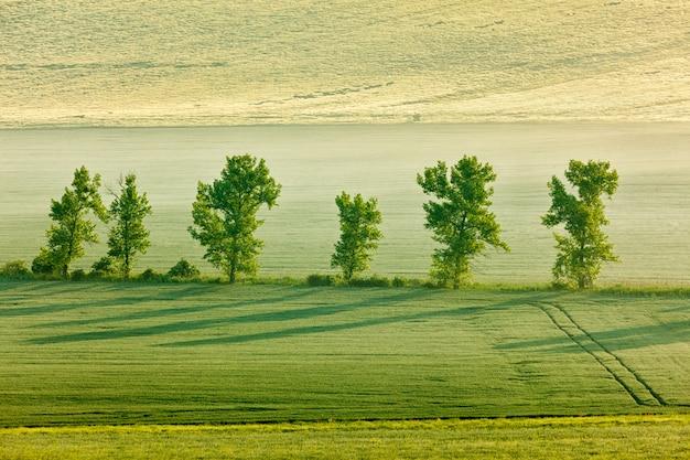 Morawski toczny krajobraz z drzewami w ranku