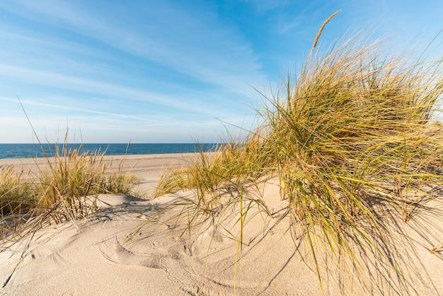 Morze bałtyckie ze złotożółtymi owsami plażowymi w słońcu