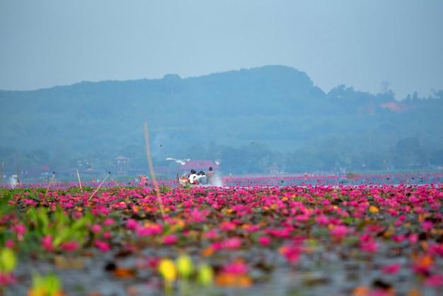 Morze czerwonego lotosu