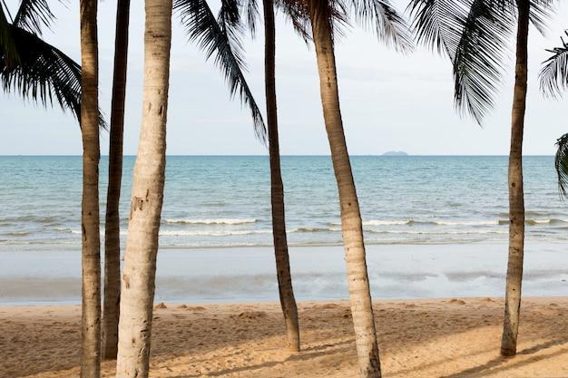 Morze jest widoczne przez gałęzie palmy
