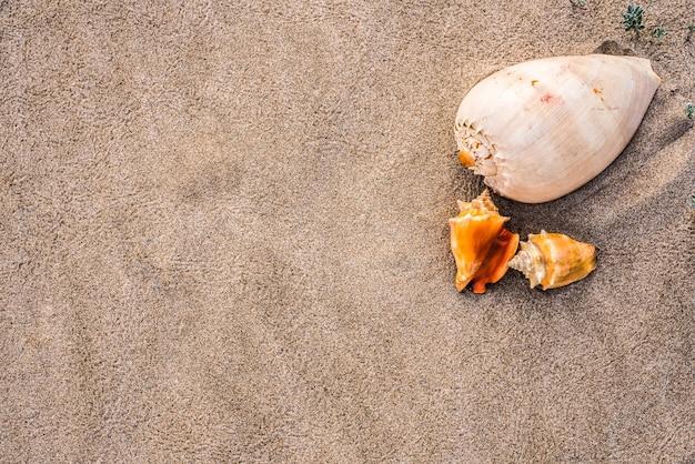 Morze łuska na piasku plaża