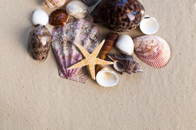 Morze łuska z piaskiem jako tło
