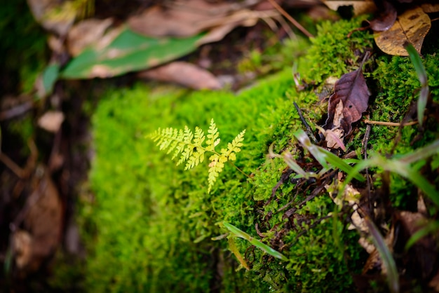 Mos w lesie deszczowym