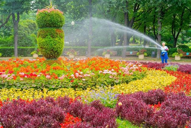Moskwa. rosja. 01.08.2021 r. wąż do podlewania klombów w parku.
