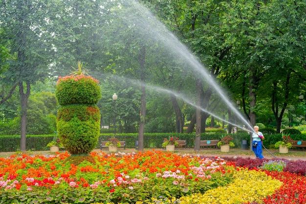 Moskwa. rosja. 01 sierpnia 2021. wąż do podlewania klombów w parku.