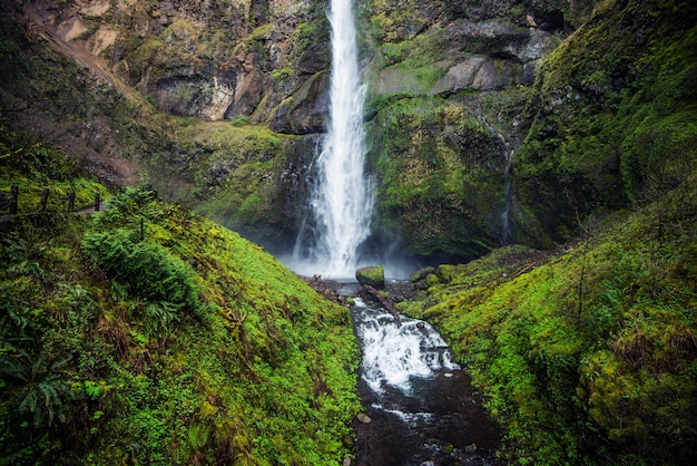 Mossy oregon wodospad