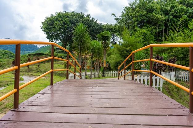 Most nad górską rzeką do doliny herbaty cameron. piękno dzikiej przyrody w malezji.