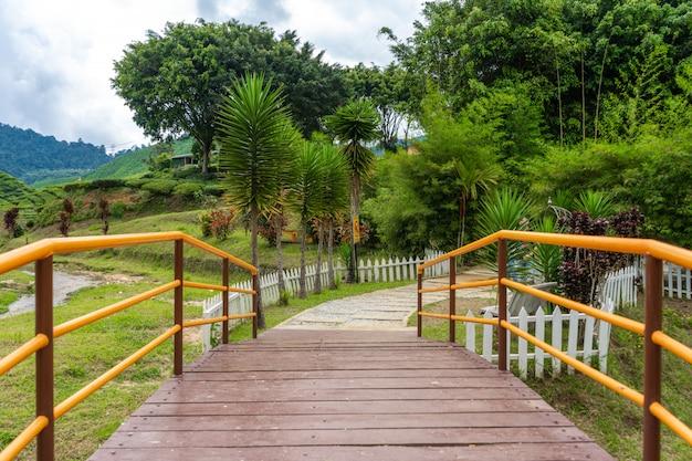 Most nad górską rzeką do doliny herbaty cameron. piękno dzikiej przyrody w malezji