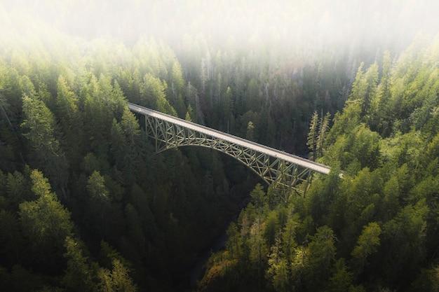Most nad rzeką w lesie