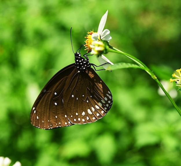 Motyl na białym kwiecie w ogrodzie